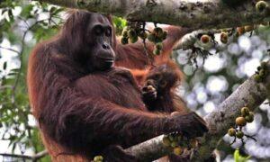 Taman Nasional Kutai (TNK) Prevab
